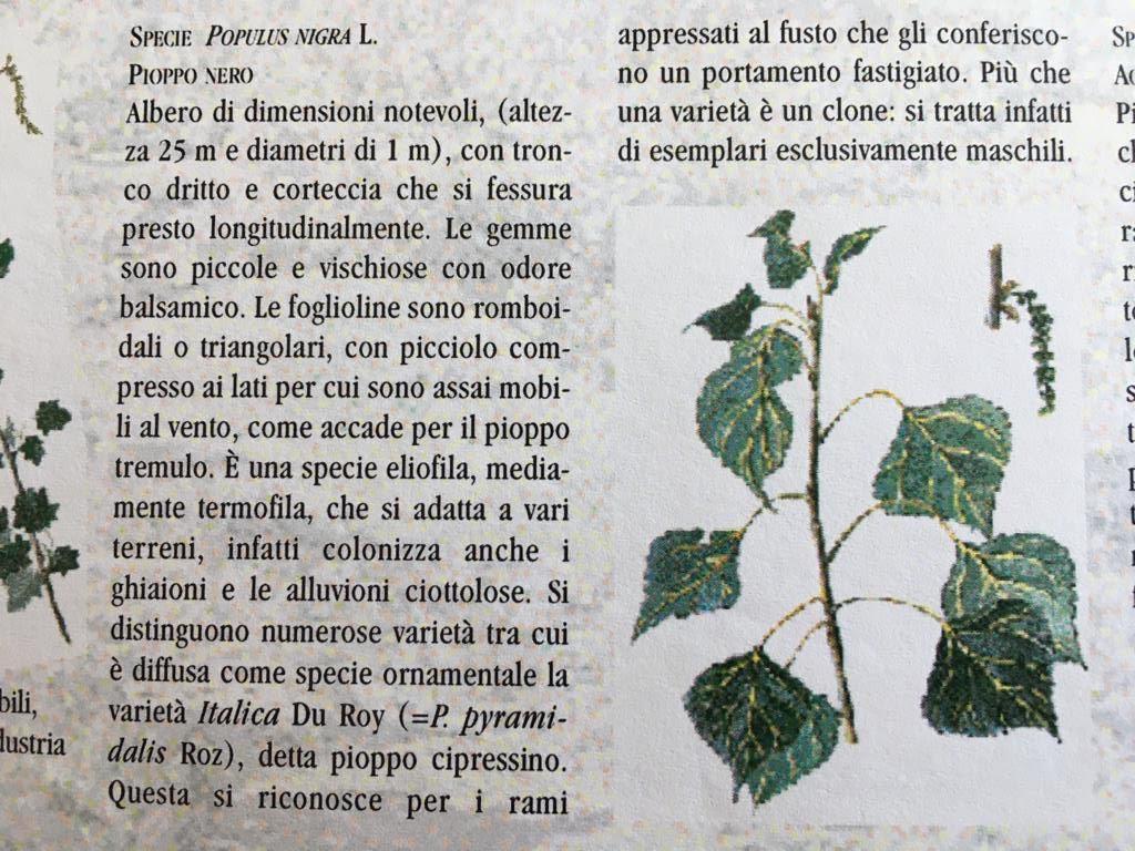 Il Pipoppo Nero