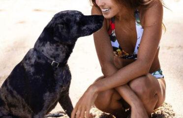 Spiaggia Amica Dei Cani